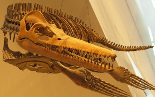 pliosaurio5
